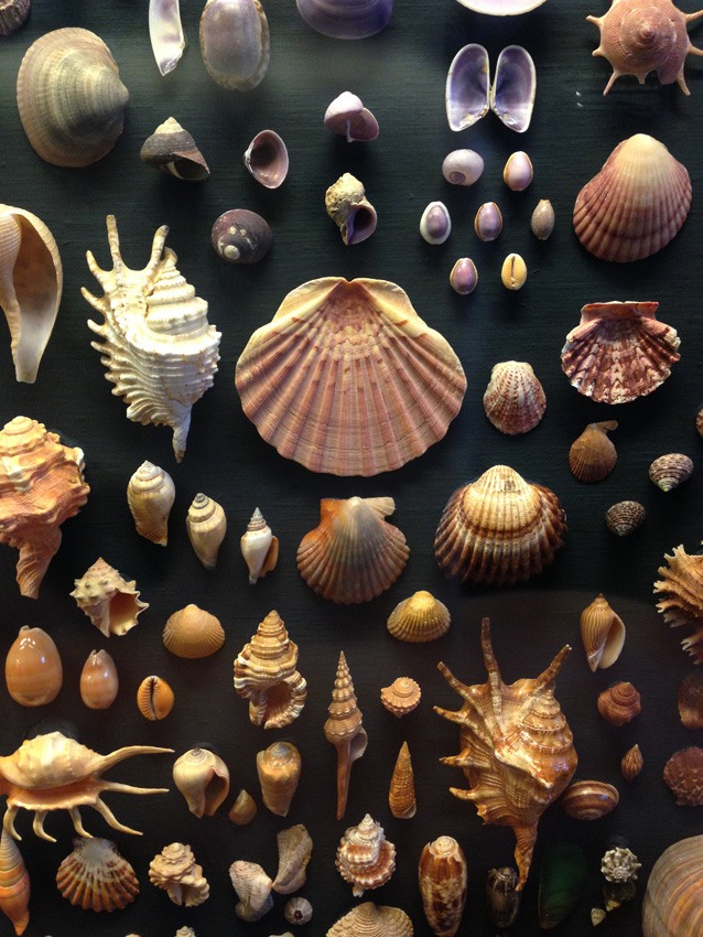 Shells in the Natural History Museum, Gothenburg